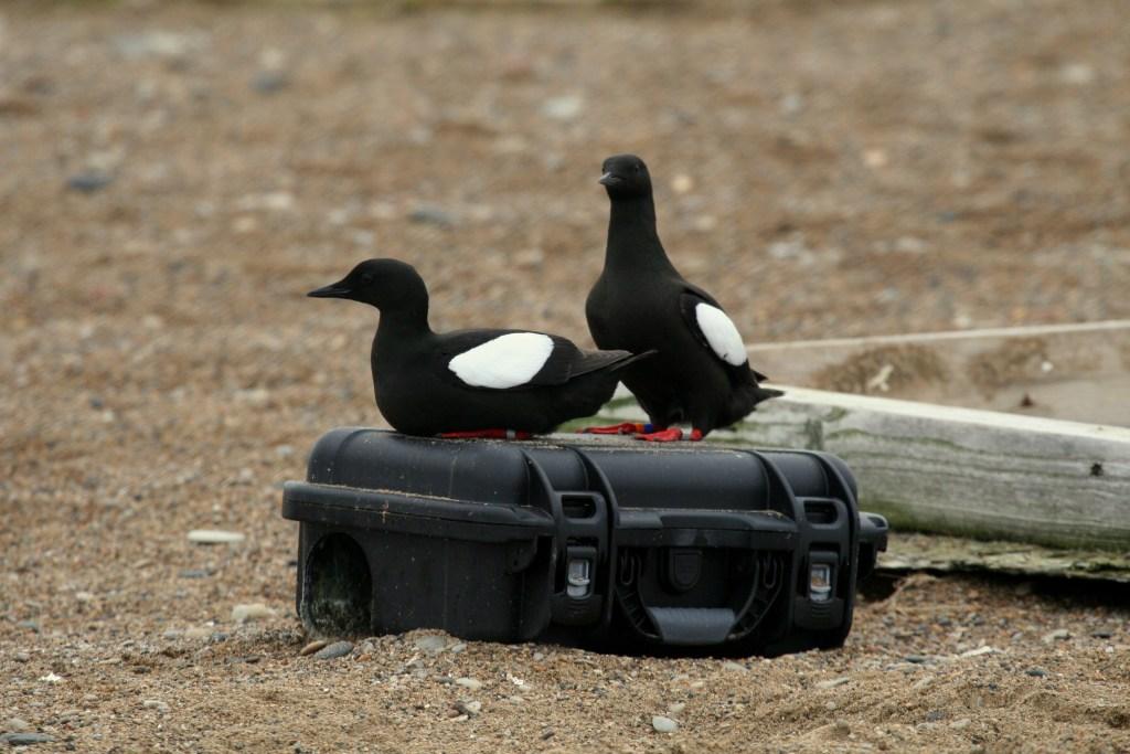 Seabird Update