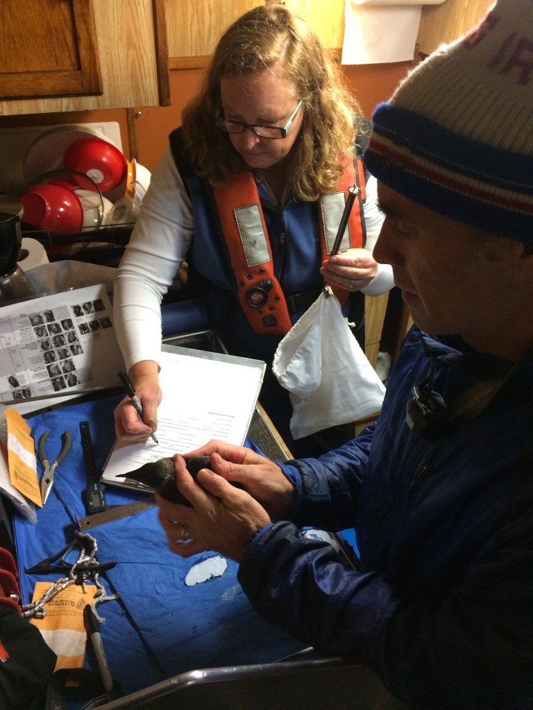 Senior faculty researcher Kim Nelson and Principle Investigator Matt Betts collecting murrelet data.