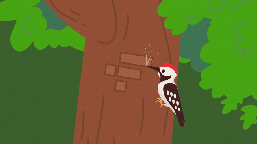 FTX listed tokenized lumber futures so a woodpecker carved the crypto ecxhange's logo into a tree.