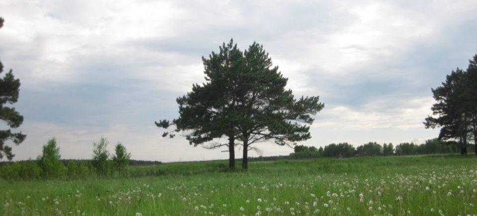 Slava2006