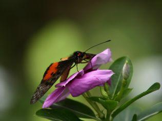 Butterfly_Orange_1600
