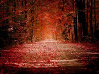 autumnug5