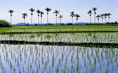 ??,???? (Ricefields in Chih-Hsiang, Taiwan)