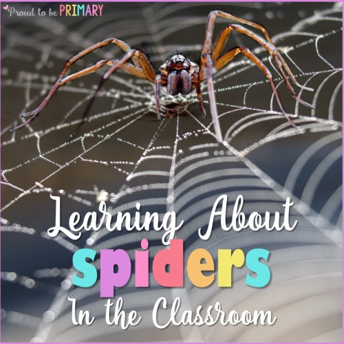all about spiders - nonfiction science lessons for kids