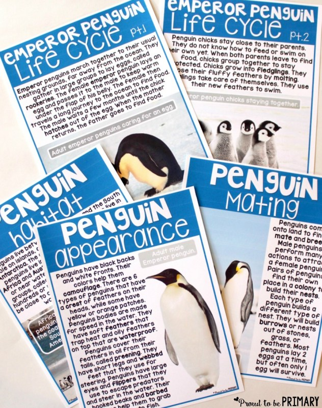 all about penguins - life cycle