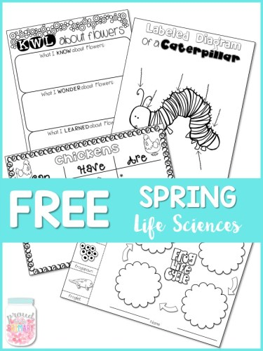 spring-themed activities for the classroom - spring life sciences unit