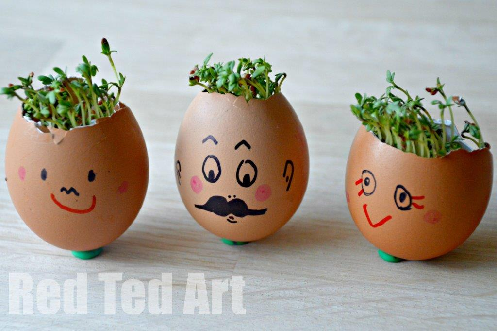 red ted art - cress head plants