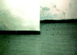 piso sótano con humedades y plagas