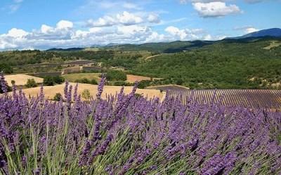 Préparez vos vacances au Mas des îles en Provence occitane