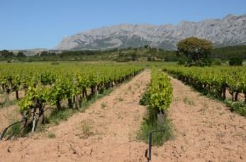 Vignoble au pied de la Sainte-Victoire (Bouches-du-Rhône).