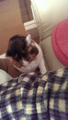 摂理猫と飼い主の攻防5