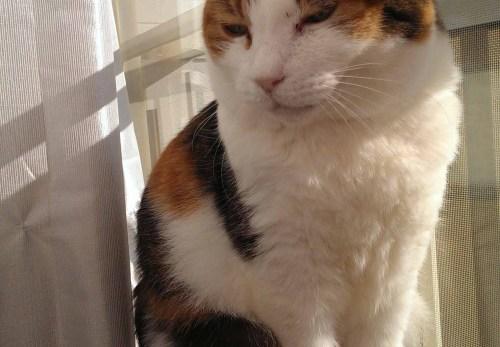 モデル立ちの摂理猫