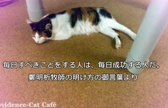 providence cat