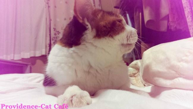 摂理猫メモリー74