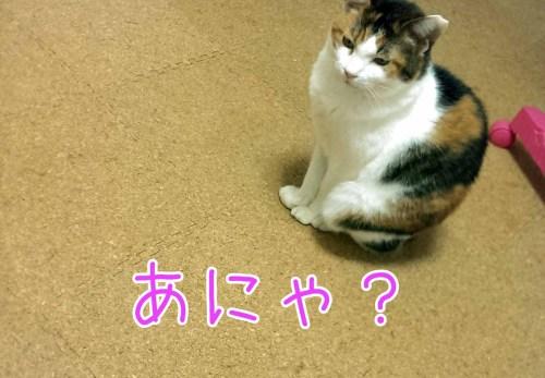 摂理猫 温風待ち