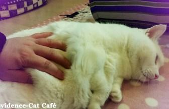 茨城阿見の猫カフェ4