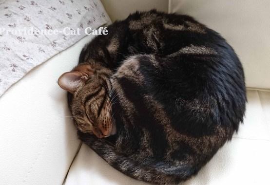 摂理猫二世の昼寝
