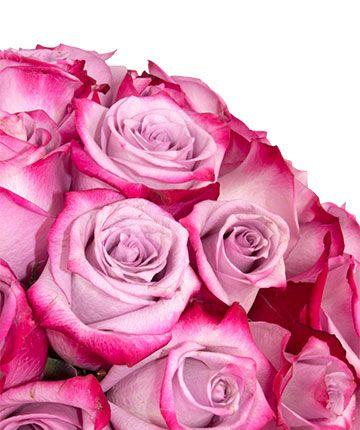 Rosas frescas deep purple