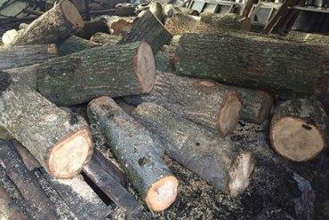 Цілий КамАЗ зрізаного дуба вилучили кременецькі поліцейські