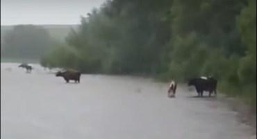 У Стриївці річка вийшла з берегів