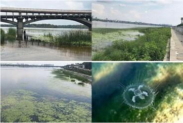 Медузи атакують Київ