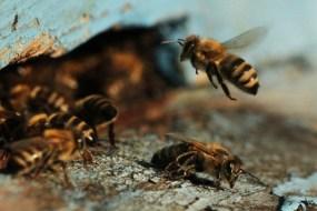 У Шумському та Бучацькому районі потруїли бджіл