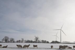 wind turbine and animals