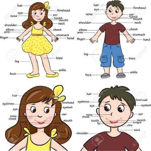 Для детей части тела человека. Что такое часть тела ...