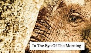In the Eye of the Morning, by Cheryl Merrill