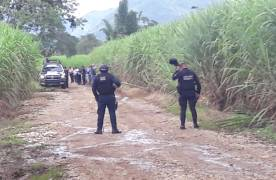 Localizan tres ejecutados en cañales de Fortín