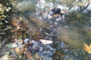 El Potrero y Central Energética, contaminan el agua y causan problemas renales