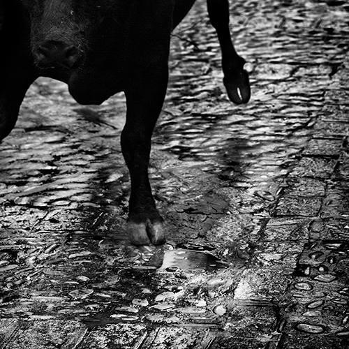 """""""Al toro"""" - José Antonio Domínguez - 280414"""
