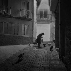 """""""La señora que susurraba a los gatos"""" - Miguel Cabezas - 090714"""
