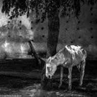 """""""Un caballo en la noche"""" - Juan María Rodríguez - 240915"""