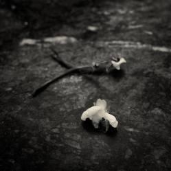 """""""Flor caída"""" - Xavier Ferrer Chust - 111215"""