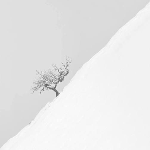 """Tree"" - Asier Garagarza - 051115"