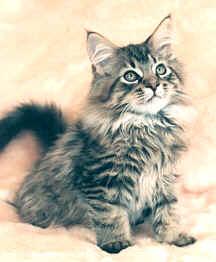 ABC para nuevos dueños de gatos