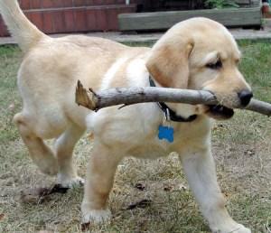 Cachorro jugando