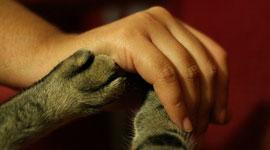 Cómo confrontar la muerte de una mascota