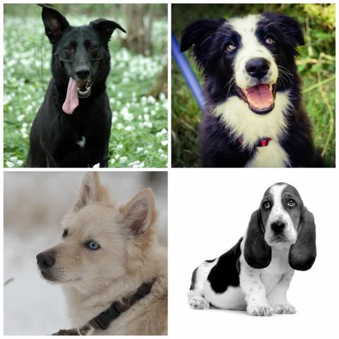 Atención! Los perros hablan!