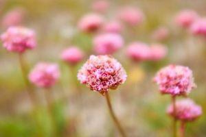 flores_tierra_del_fuego
