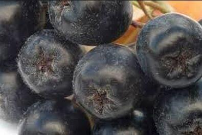Черноплодная рябина, ягоды