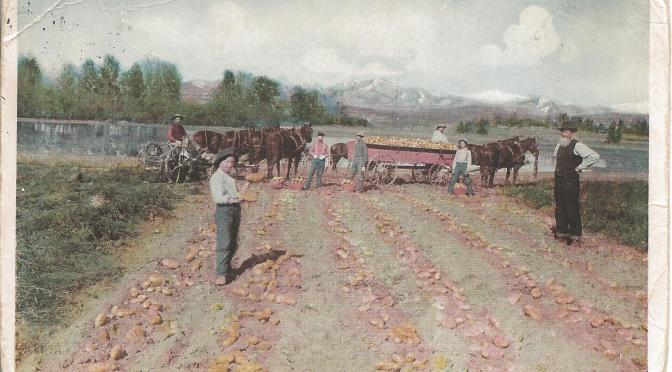 Larimer County historic horse postcard: Where the french fries came from in 1908