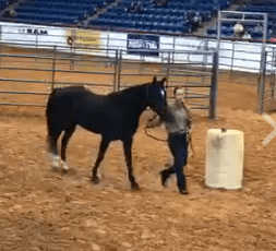 Extreme Mustang Makeover, Cayla Stone and Leda, Ft. Worth, TX, Sept. 14, 2017