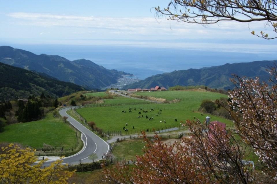 伊豆山稜線歩道 西天城高原コース(2017年4月22日)