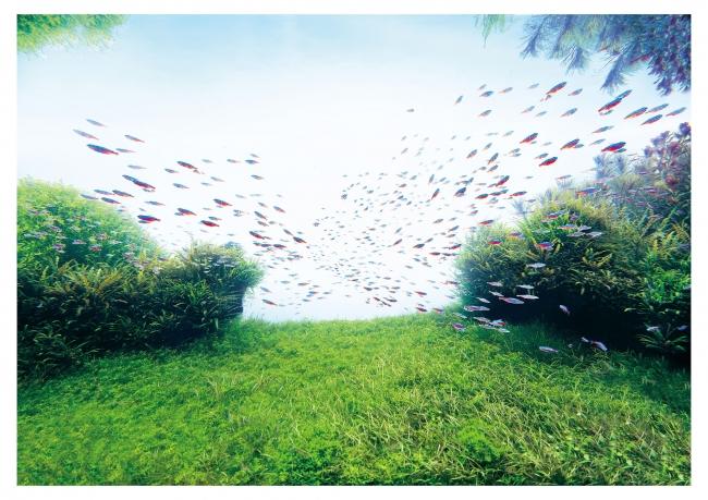 「自然水景」水槽イメージ
