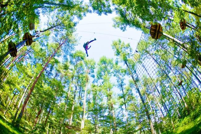 最大地上高10mでの樹上冒険が体験できます