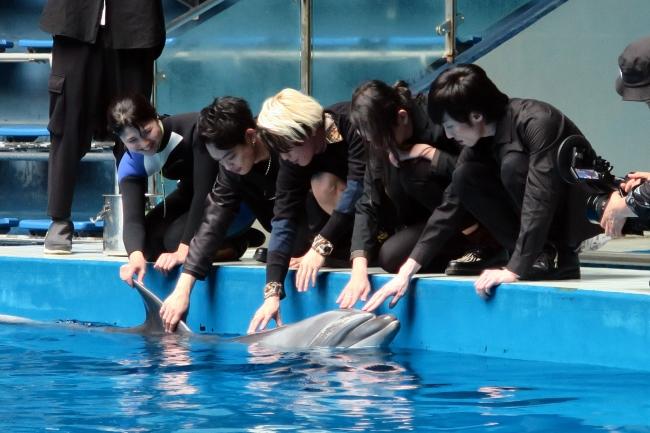 イルカと触れ合うメンバーたち