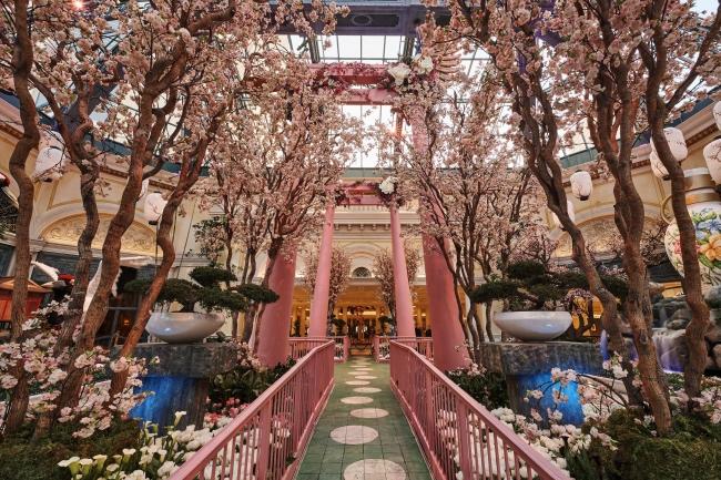 植物園の東エリア: 桜のトンネル。