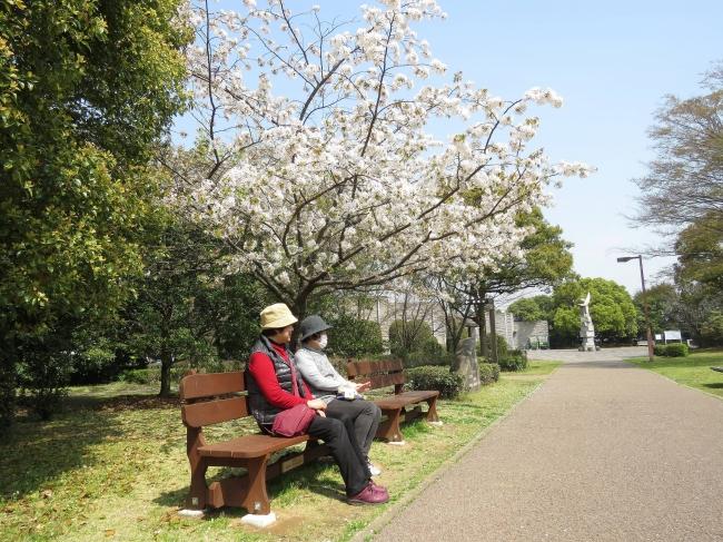 春の谷津干潟公園